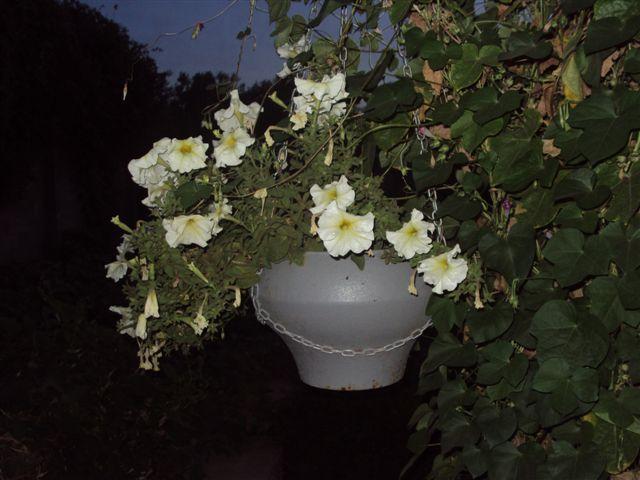 Идеи клумб фото фонтаны для дачи